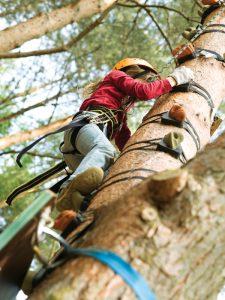 Spaß und Abenteuer beim Baumklettern